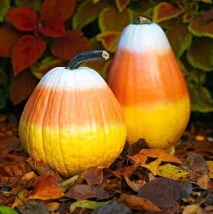 candy corn pumpkins - Pumpkin Decor