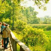 Things to Do in Ohio's Lake Erie Shore--Magee Marsh Wildlife Area