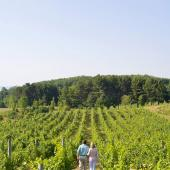Things to Do in the Traverse area--Winery tours