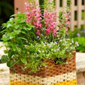 DIY basket container garden