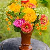 Marigold mix
