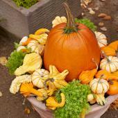 Pumpkin focus