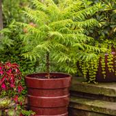 Contrasting container garden