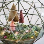 Holiday terrarium