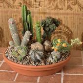 Desert dish garden