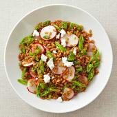 Wheat Berry, Sugar Snap Pea, Radish and Goat Cheese Salad