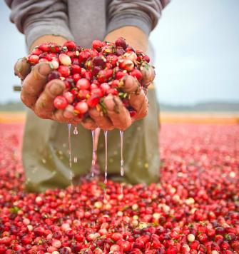 Wisconsin S Fall Cranberry Harvest Midwest Living