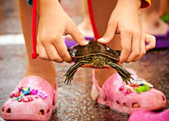 Want to see Nisswa's turtle race? Check out our fun video at midwestliving.com/turtle.