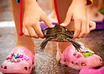 Nisswa turtle race