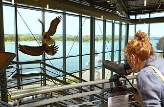 National Eagle Center. Wabasha, Minnesota.
