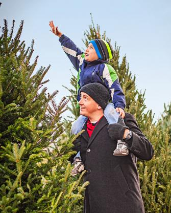 Shopping for a tree at Fuller's Home and Hardware in Hinsdale.