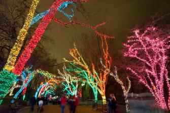 Lights dazzle at the Lincoln Park Zoo. Photo courtesy of Lincoln Park Zoo.