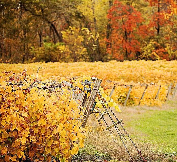 Owl Creek Happenings Tumbleweed Traveling: Two-Day Getaway In Illinois Wine Country