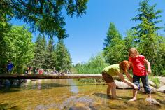 The Mississippi River's cool headwaters, in Itasca State Park, invite wading on a hot day.
