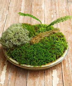 How To Make a Moss Dish Garden