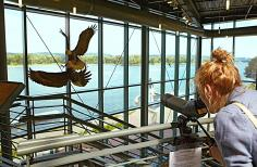 National Eagle Center. Wabasha, Minnesota.
