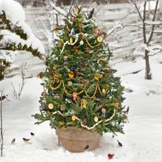 How to Make Bird-Feeding Ornaments