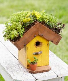 How to Make a Living-Roof Birdhouse