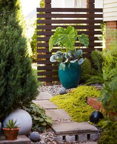 Scott Johnson's garden