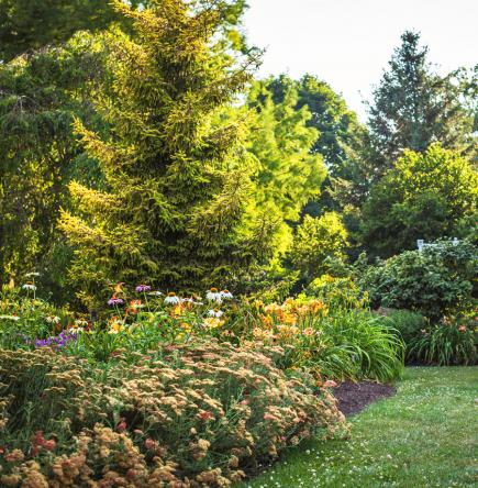 20 Tough Trees For Midwest Lawns