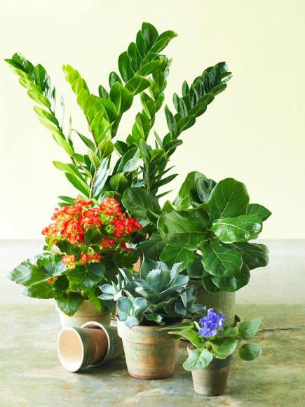 5 Hard To Kill Indoor Plants