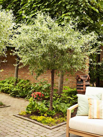 Outdoor Trees for Small Spaces