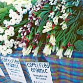 Things to Do in Madison--Dane County Farmers' Market