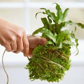 Wrapping a string plant